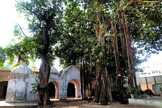 Gorakhnath Temple is shaded by peepal trees
